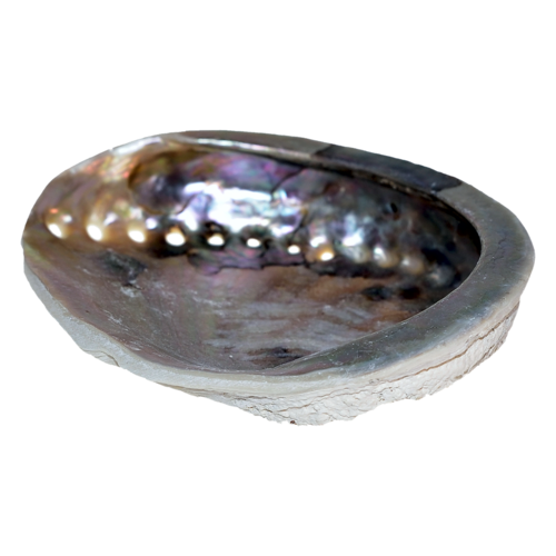 Abalone Sea Shell, soap dish